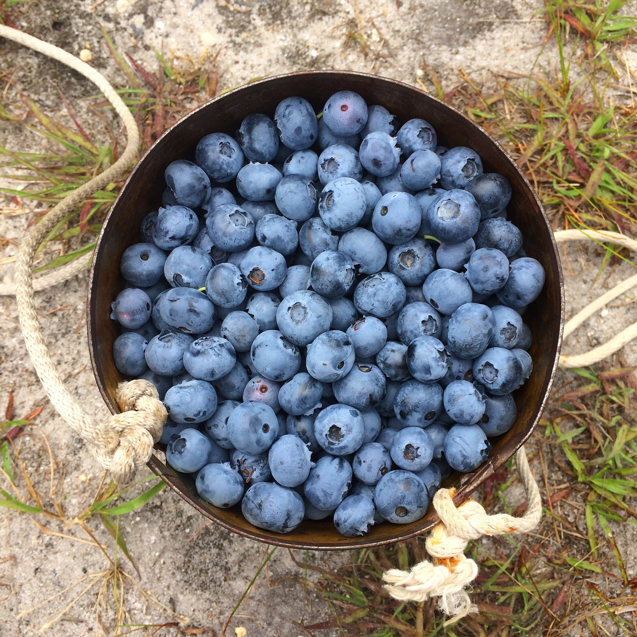Farm-Fresh Blueberry Compote