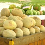 melonbasket