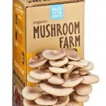 mushroomfarm