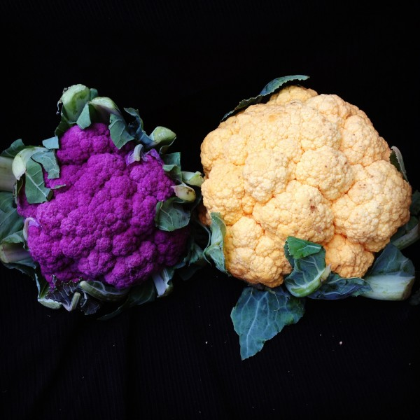 purple and yellow cauliflower