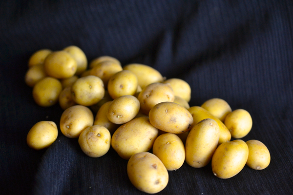 Dutch Yellow Potatoes