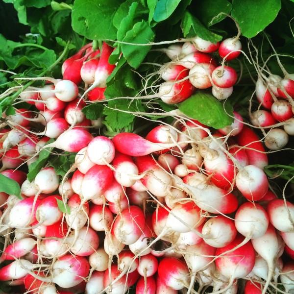Baby radishes