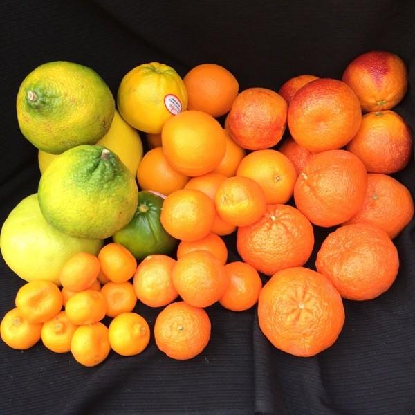 citrus stash