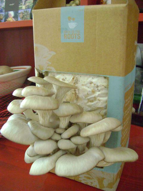 grow-your-own mushroom kits