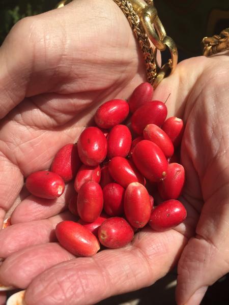 hand of berries