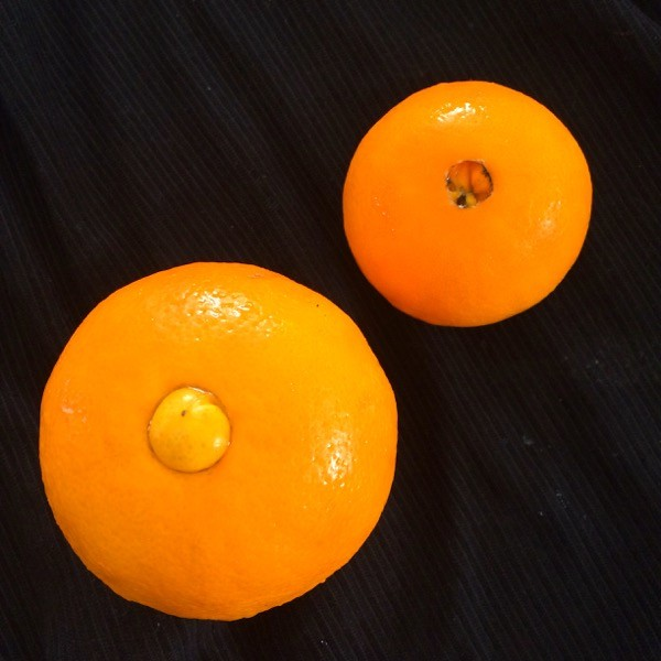 """Side note: Did you know that the """"navel"""" on a navel orange could be an """"innie"""" or an """"outie""""?"""